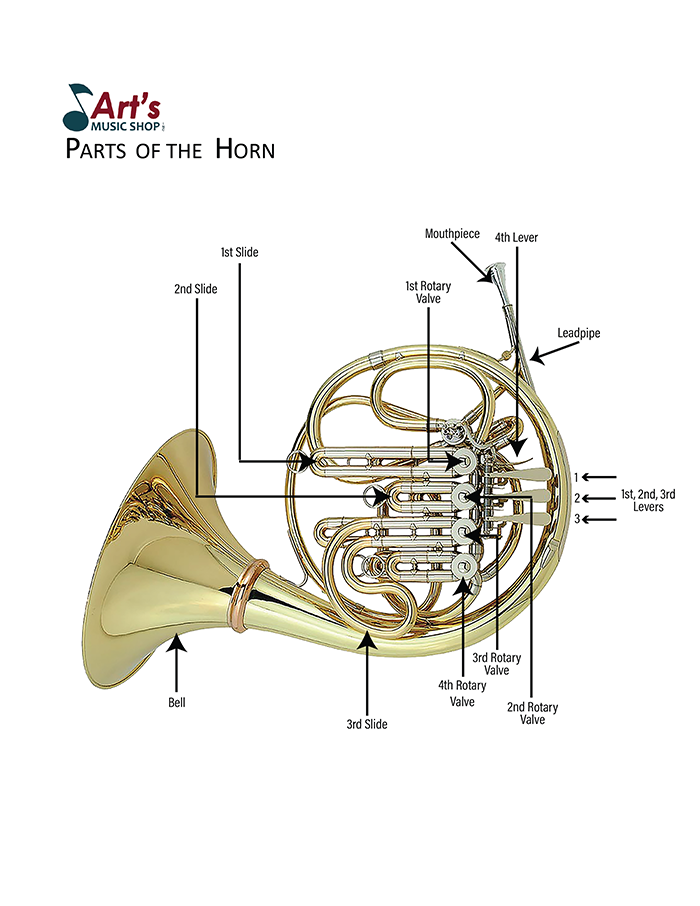 Horn-Parts of the Instrument-Art's Music Shop